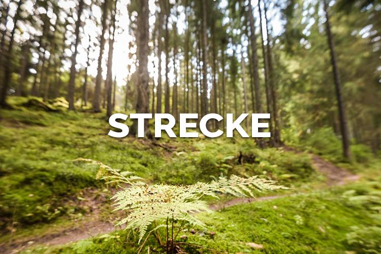 Strecke TRAIL HYPE Singer Wäldercup